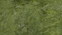 Aspergeveld 5 augustus 2007