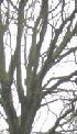 Marja bij de kastanjeboom
